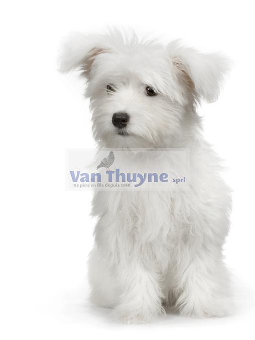 Etablissements Van Thuyne - Honden en katten