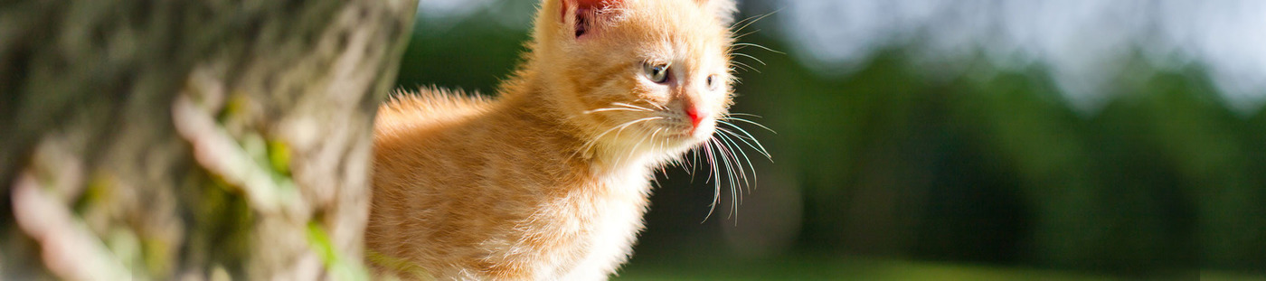 Etablissements Van Thuyne - Produits animaliers