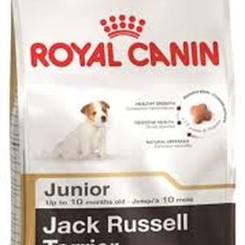 JACK RUSSEL JUNIOR (500G - 1.5KG - 3KG)