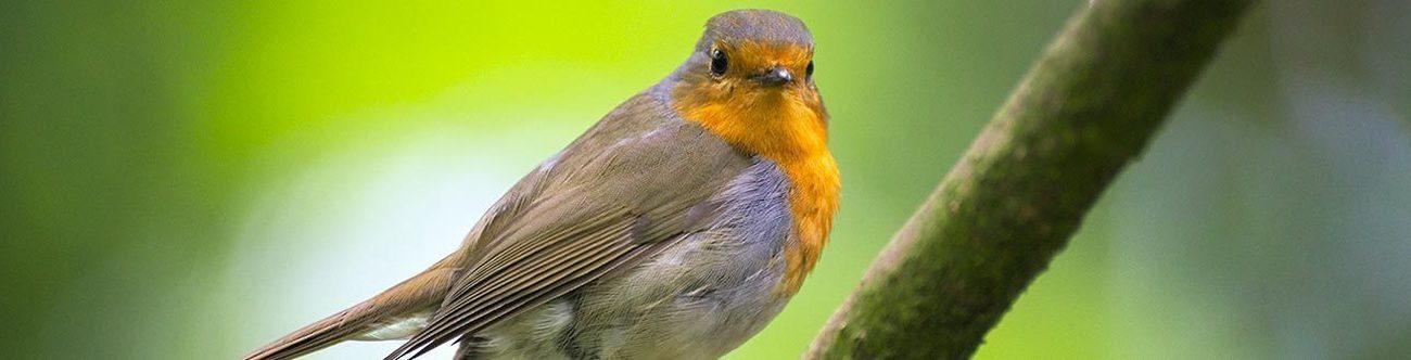Etablissements Van Thuyne - Oiseaux